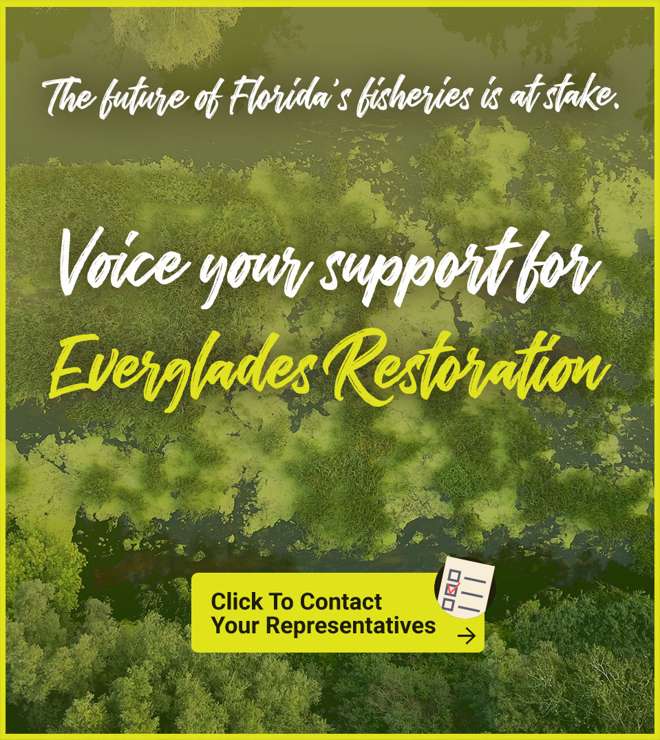 The future of Florida's fisheries is at stake. Voice your support for Everglades Restoration. Contact your representatives Today!