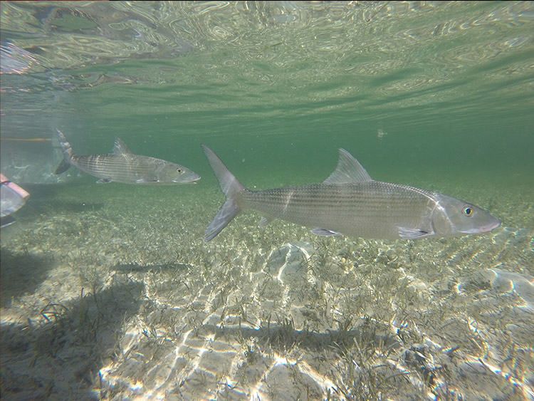 Bonefish Pre-Spawning Site Discovery and Protection